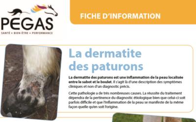 La dermatite des paturons